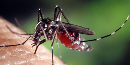 MDA Mosquito Control Program