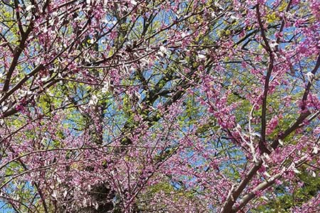 Pepco Offers Free Trees to Help Save Energy