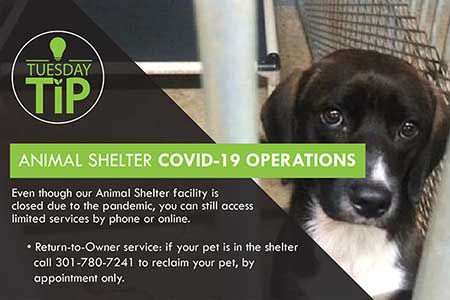 Animal Shelter COVID-19 Operations / Operaciones de Refugio de Animales COVID-19