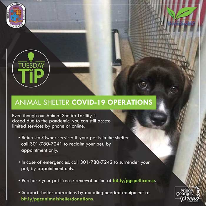 Animal Shelter COvID-19 Operations