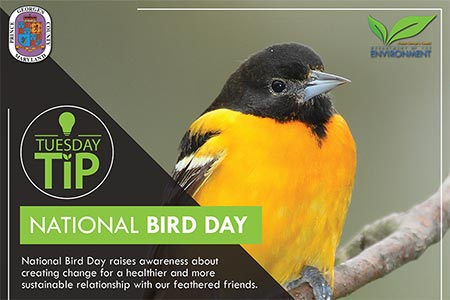 Tuesday Tip: National Bird Day