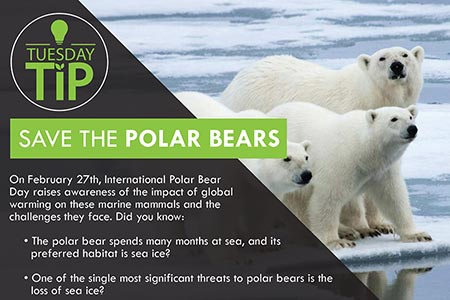 Tuesday Tip: Polar Bears